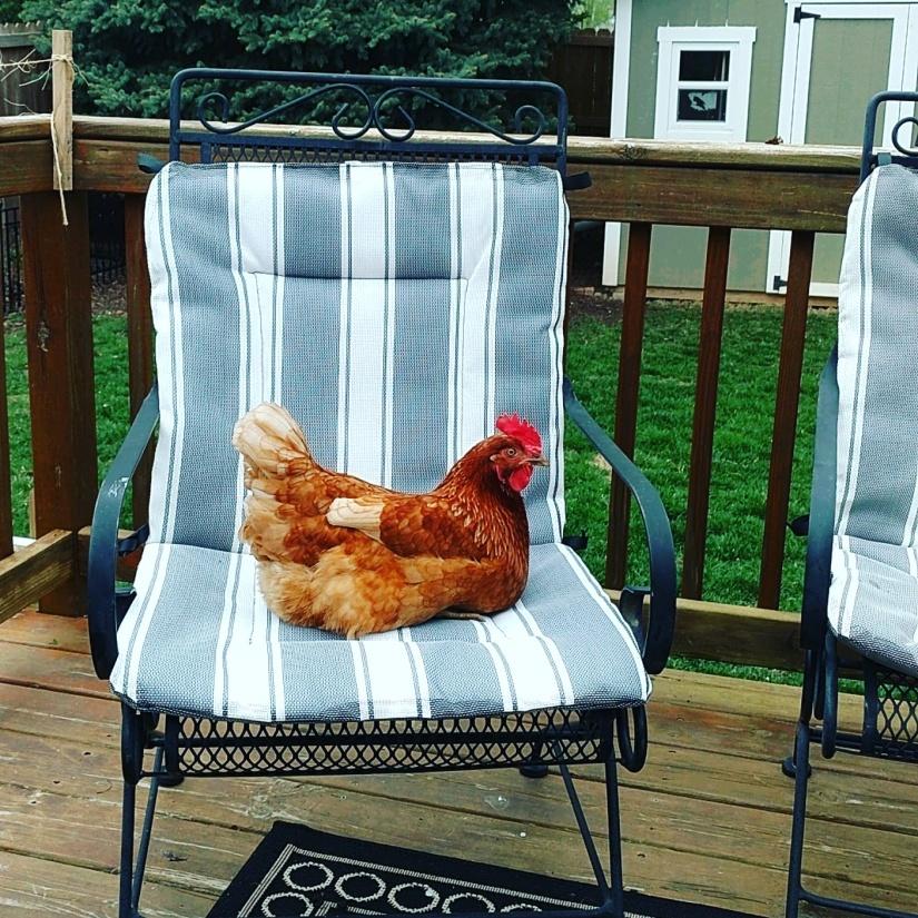 patio chair1